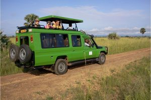 Due to increased demand from our clients, we have come up with a new package:Uganda Birding Wildlife tourthat meets the expectations of the clients. Travelling to Uganda for birding has always been very enriching with memorable experiences. But we have observed that a number visitors would want to know more about the cultures of the people. The interaction of the wildlife with the people demonstrates the uniqueness of Africa. For this reason, we have come up with this new package that includes Birding and Wildlife with cultural experience