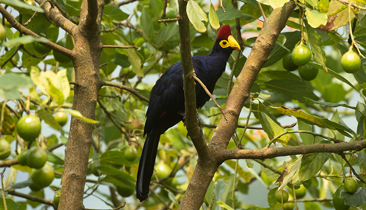 Birding-in-Uganda