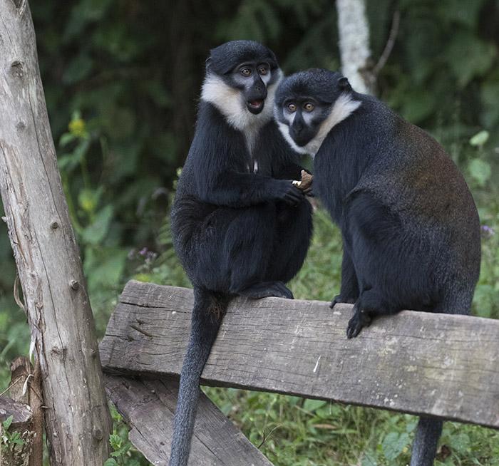 UGanda Primate Tours
