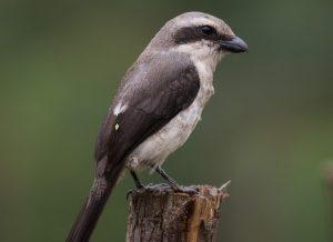 Birding Tours Uganda