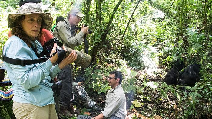 Uganda Mountain Gorillas Trekking