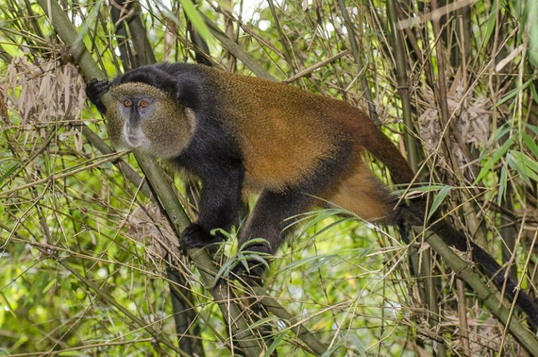 Primates and Birding