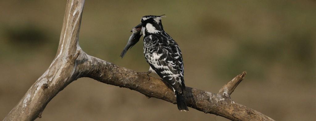 Birding Tours to Uganda